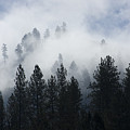 Mountain Mist by Idaho Scenic Images Linda Lantzy