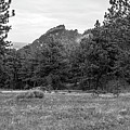 Mountain Peak Through The Trees In Black And White by Michael Putthoff