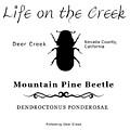 Mountain Pine Beetle Black On White by Lisa Redfern