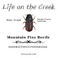 Mountain Pine Beetle Color by Lisa Redfern
