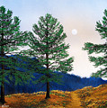Mountain Pines by Frank Wilson