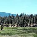 Mountain Ranch by Jenny Revitz Soper
