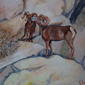 Mountain Sheep Gab Session by Charme Curtin