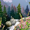 Mountain Stream by Anne Gifford