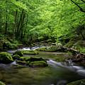 Mountain Stream by Benjamin King