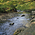 Mountain Stream by Debbie Burkhalter