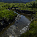 Mountain Stream by Derek Palmer