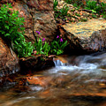 Mountain Stream Garden by Kenneth Eis