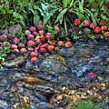 Mountain Stream In Oak Glen by Tommy Anderson