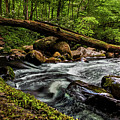 Mountain Stream Iv by Christopher Holmes