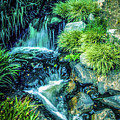 Mountain Stream by Samuel M Purvis III