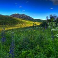 Mountain Wildflowers And Light Whispers by Bill Sherrell