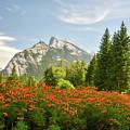 Mountain Wildflowers by Paul Quinn