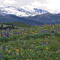 Mountain Wildfowers by MH Ramona Swift