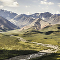 Mountains In Denali National Park by Phyllis Taylor