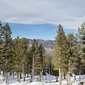 Mountains Through The Trees by Katy Robinson