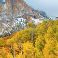 Mountainside Of Fall Color by Teri Virbickis