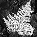 Mounts Botanical Garden 2365 by Bob Neiman