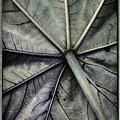 Mounts Botanical Gardens 2360 by Bob Neiman
