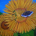 Mourning Cloak's Sunflowers by Teresa Marie Staal Cowley