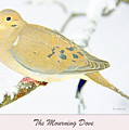 Mourning Dove In Snow Animal Portrait by A Gurmankin