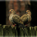 Mourning Doves by Ola Allen