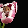 Mouse In Pink And White by Framing Places