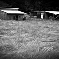 Moving Grass by Dale Stillman