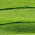 Mowing Hay  by Thomas R Fletcher