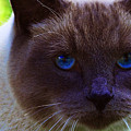 Mr. Blue Eyes by Sharon Talson