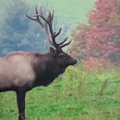 Mr Elk Enjoying The Autumn by Jeanette Oberholtzer