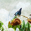 Mr Jay And The Sunflowers by Theresa Tahara