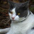 Mr. Kitty   by Bretta Elmore