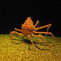 Mr. Krabbs by Bill Cannon