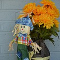 Mr Scarecrow by Erica Degni