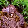 Mr. Squirrel by Kami McKeon