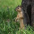 Mr. Squirrel by Kim Henderson