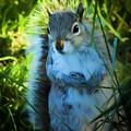 Mr. Squirrel by Michael DArienzo