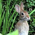 Mrs. Josephine Rabbit by Trina Ansel