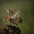 Mrs. Red Winged Blackbird by Janice Pariza