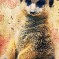 Mrs Suricate by Angela Doelling AD DESIGN Photo and PhotoArt