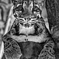 Ms Paws Monochrome by Steve Harrington