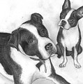 Ms Proutys Dogs by Katie Alfonsi