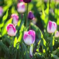 Msu Spring 2 by John McGraw