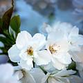 Mt. Fuji Cherry Blossoms by Emerita Wheeling