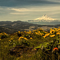 Mt. Hood And Wildflowers by Don Schwartz