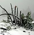 Mt Hood Snow by Albert Seger