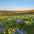 Mt. Hood Wildflower Morning by Mike Dawson