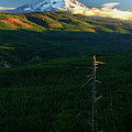 Mt Hood With Snag by Albert Seger