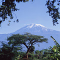 Mt. Kilimanjaro,moshi,tanzania by David Constantine